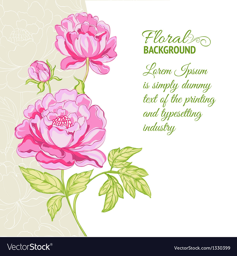 Pink peonies background with sample text vector | Price: 1 Credit (USD $1)