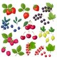 Set of various stylized fresh berries vector