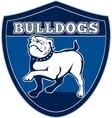 English bulldog british rugby sports team mascot vector