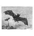 Common bat vintage engraving vector
