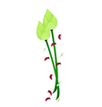 Fresh lotus flower on a white background vector