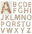 Autumn floral alphabet letters vector