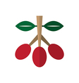 Coffee tree branch with red beans vector