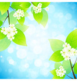 Green leaves with flowers in the sky vector