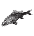 Common carp vintage engraving vector