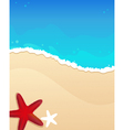 Beach with starfishes vector