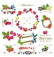 Set of various ribbons labels with berries vector