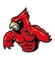 Cardinal bird mascot show his muscle vector