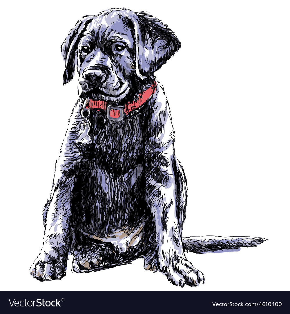 Labrador retriever 02 vector | Price: 3 Credit (USD $3)