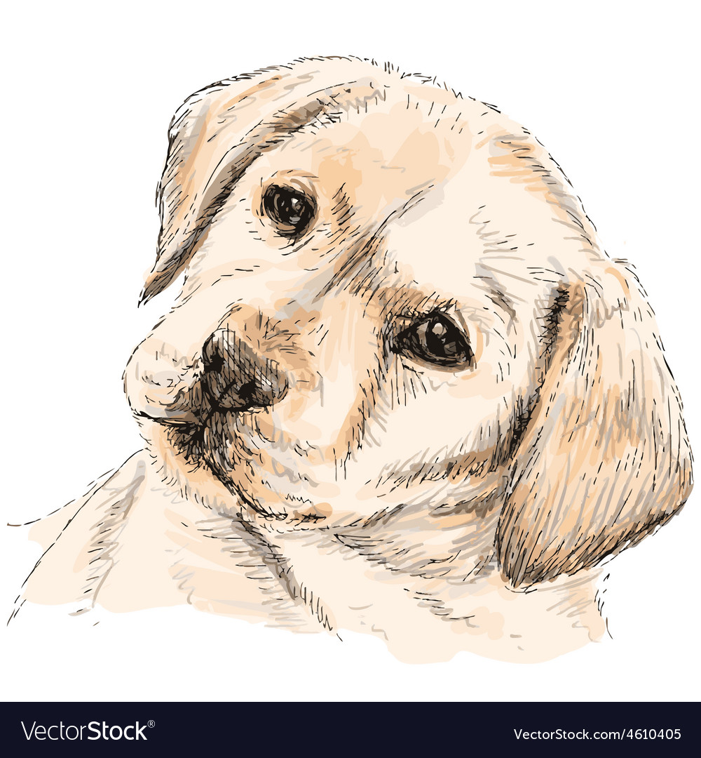 Labrador retriever 06 vector | Price: 3 Credit (USD $3)
