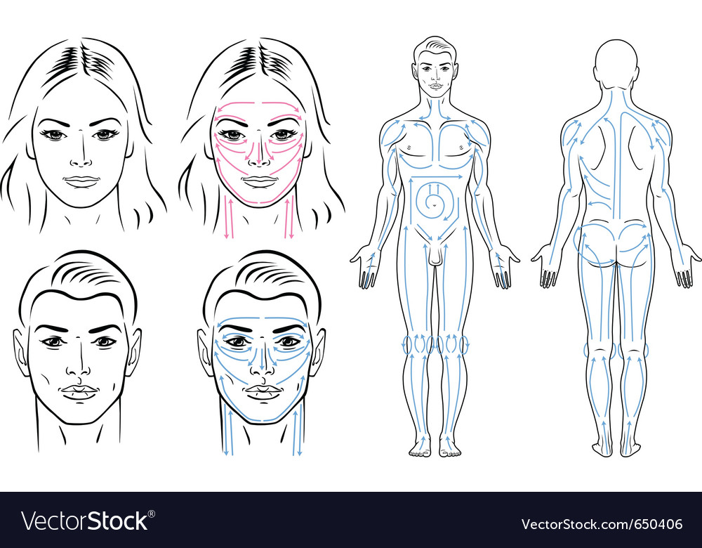 Facial and body massaging lines for man and woman vector | Price: 1 Credit (USD $1)