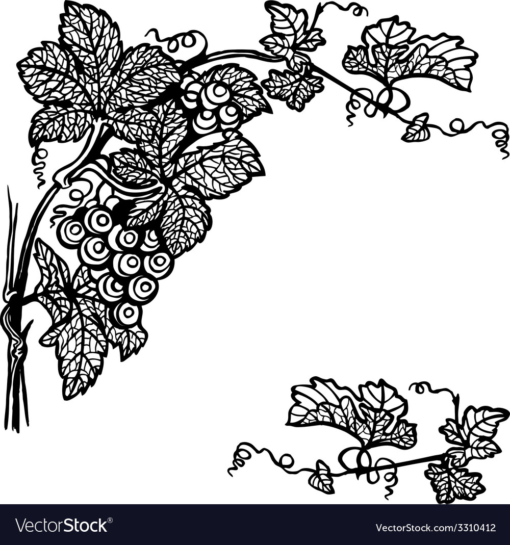 Grapes branch vector | Price: 1 Credit (USD $1)