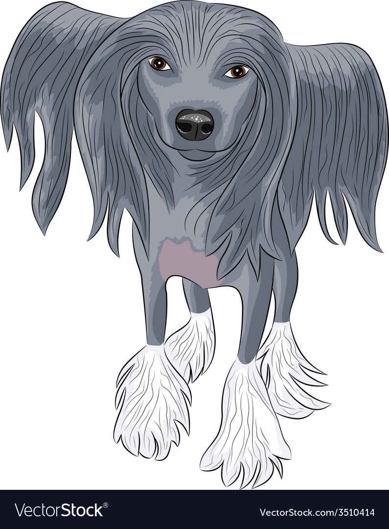 Chinese crested dog vector | Price: 1 Credit (USD $1)