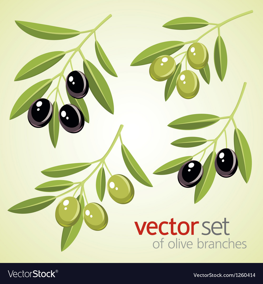 Olive branches vector | Price: 1 Credit (USD $1)