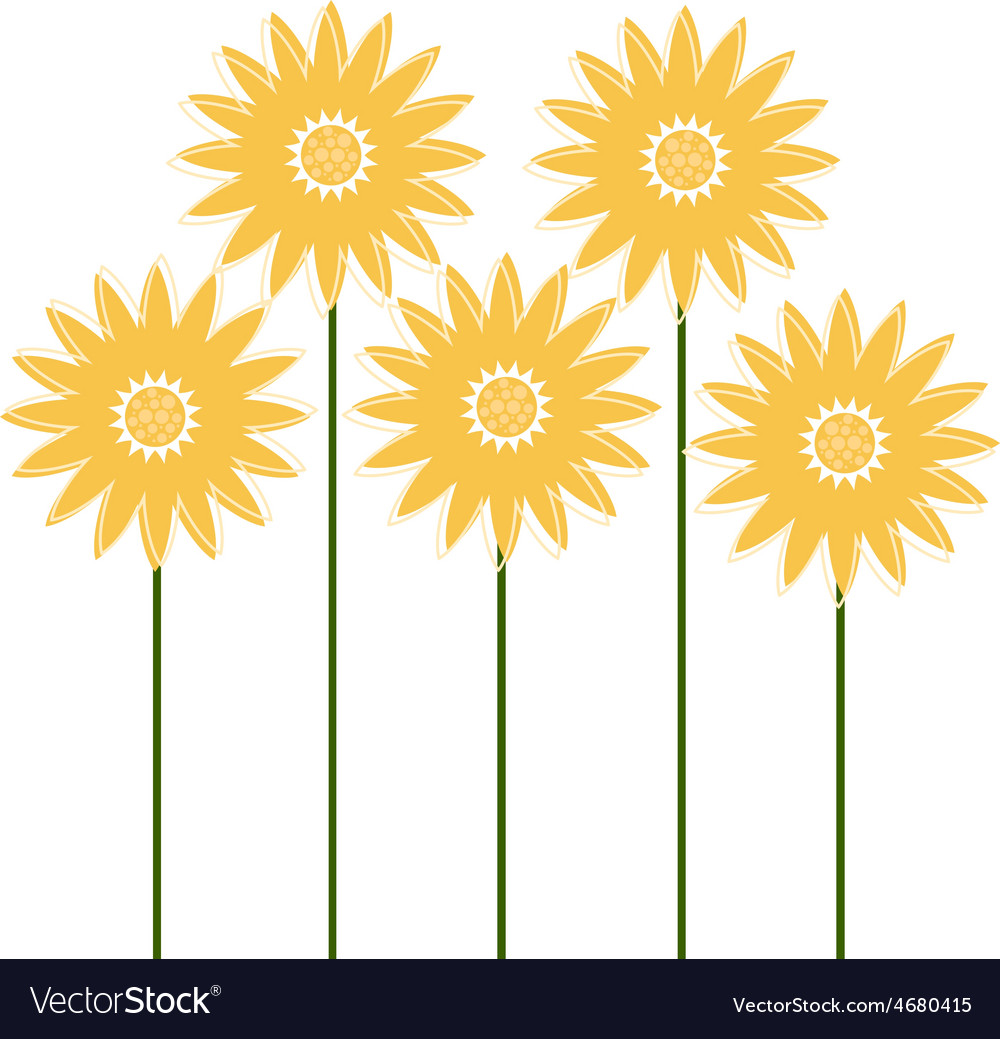 Beautiful sunflowers isolated on white vector