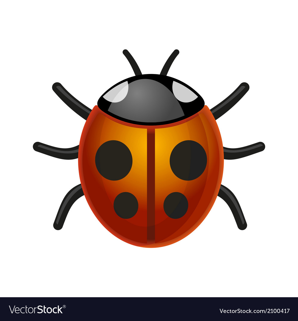 Ladybird bug on white background vector | Price: 1 Credit (USD $1)
