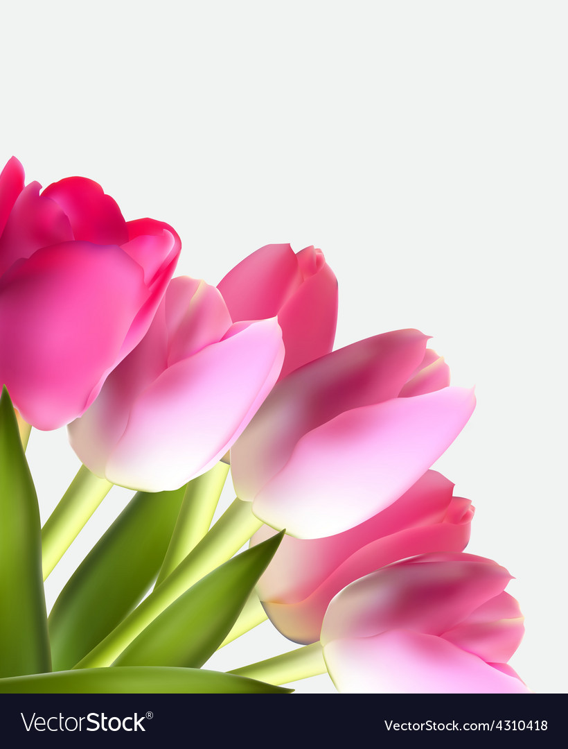 Beautiful pink realistic tulip background vector | Price: 1 Credit (USD $1)