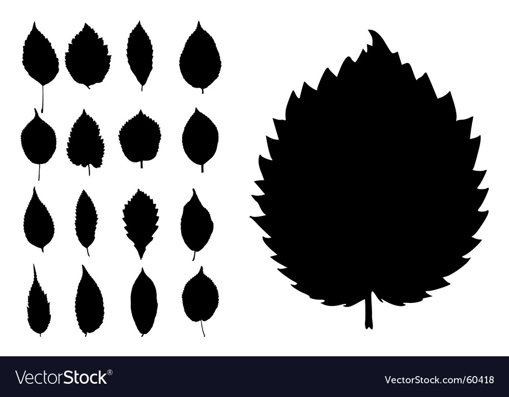 Conifers leaves collection vector | Price: 1 Credit (USD $1)