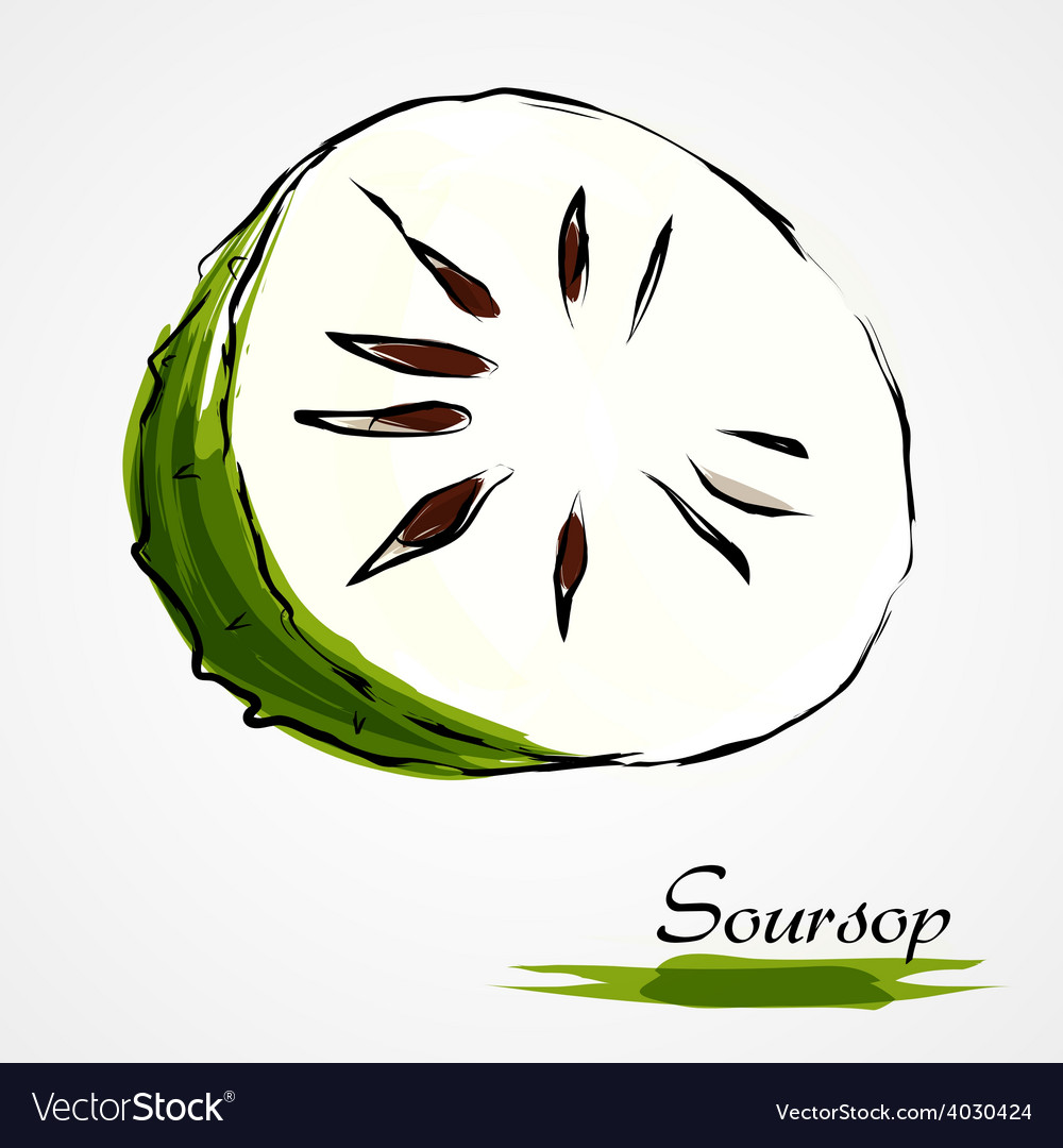 Soursop guanabana vector | Price: 1 Credit (USD $1)