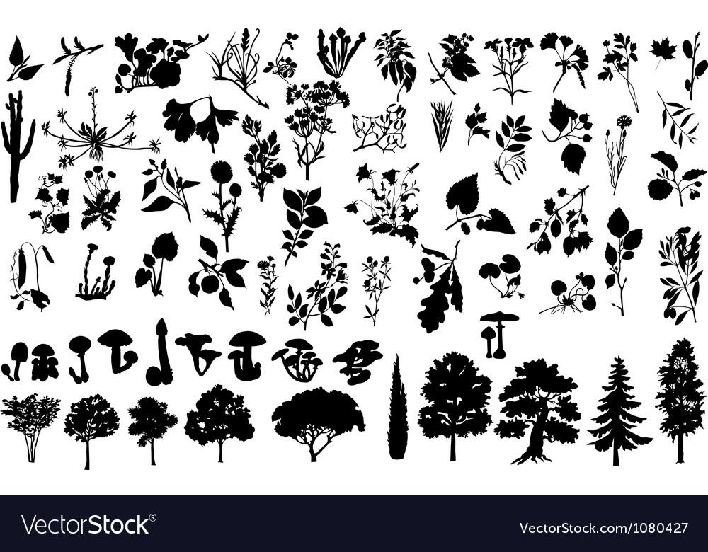Herbs vector   Price: 1 Credit (USD $1)
