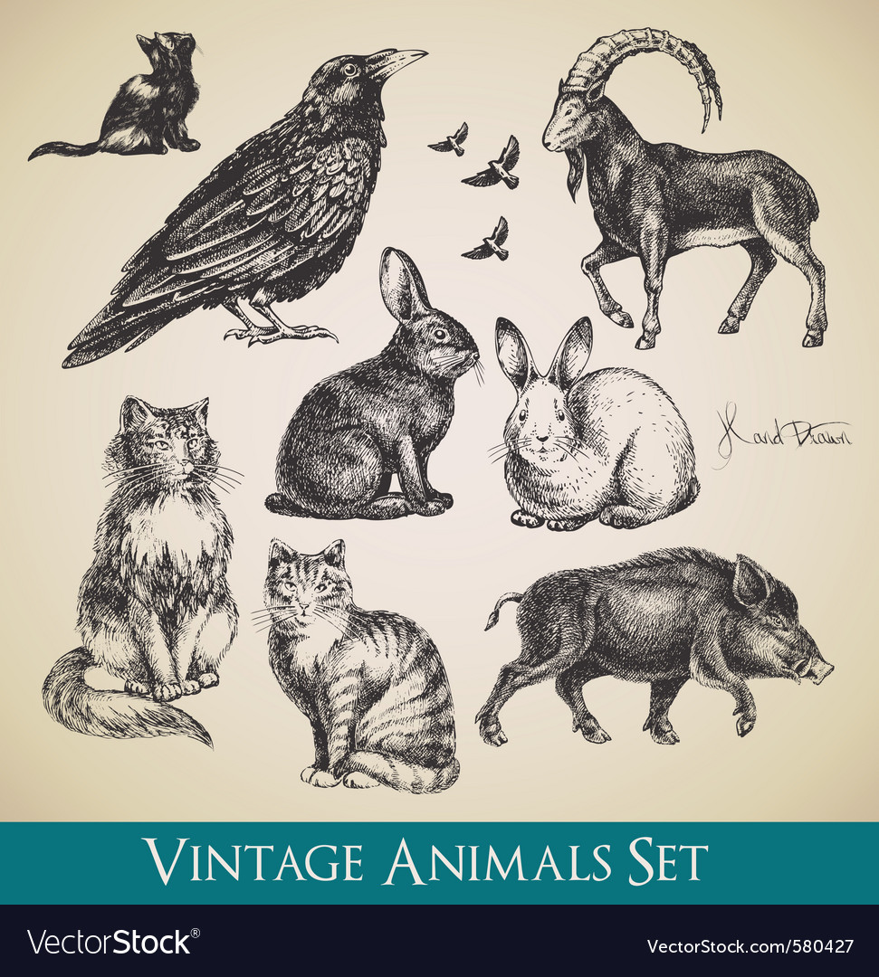 Vintage animals vector | Price: 1 Credit (USD $1)
