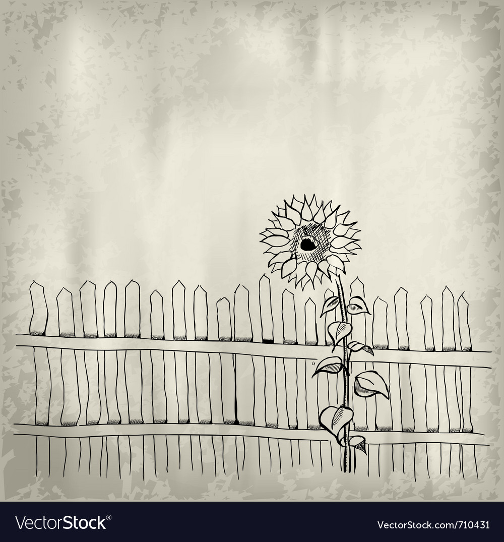 Sunflower with fence on the background vector | Price: 1 Credit (USD $1)