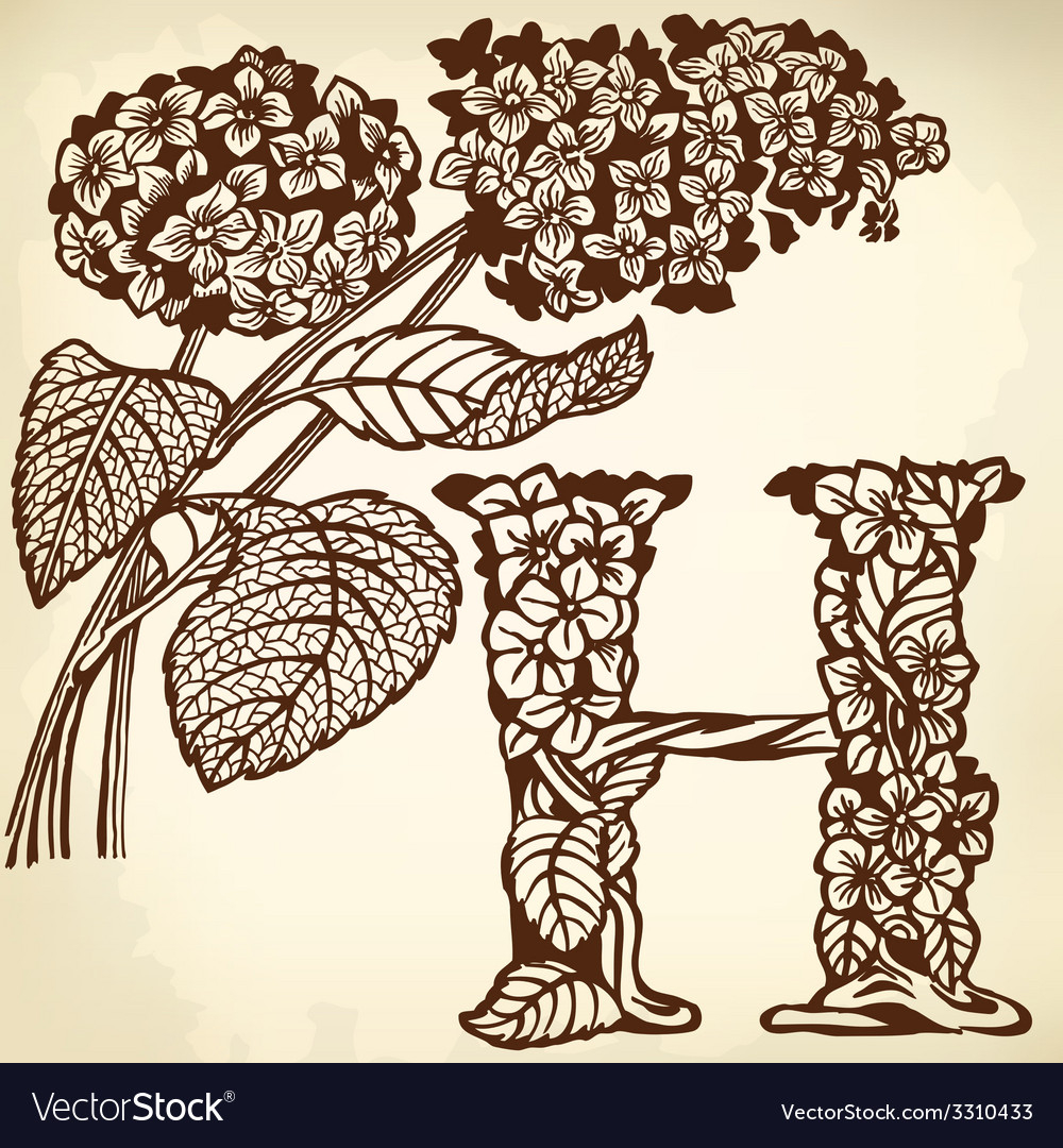 Hydrangea vector | Price: 1 Credit (USD $1)
