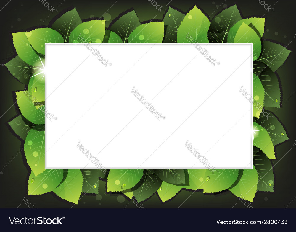 Leaves with water drops vector   Price: 1 Credit (USD $1)