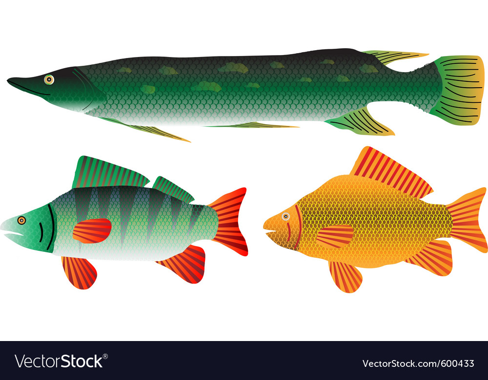 Pike carp and perch vector | Price: 1 Credit (USD $1)