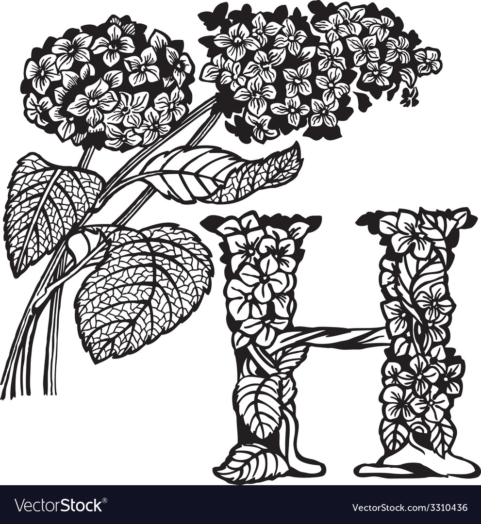 Hydrangea vector   Price: 1 Credit (USD $1)