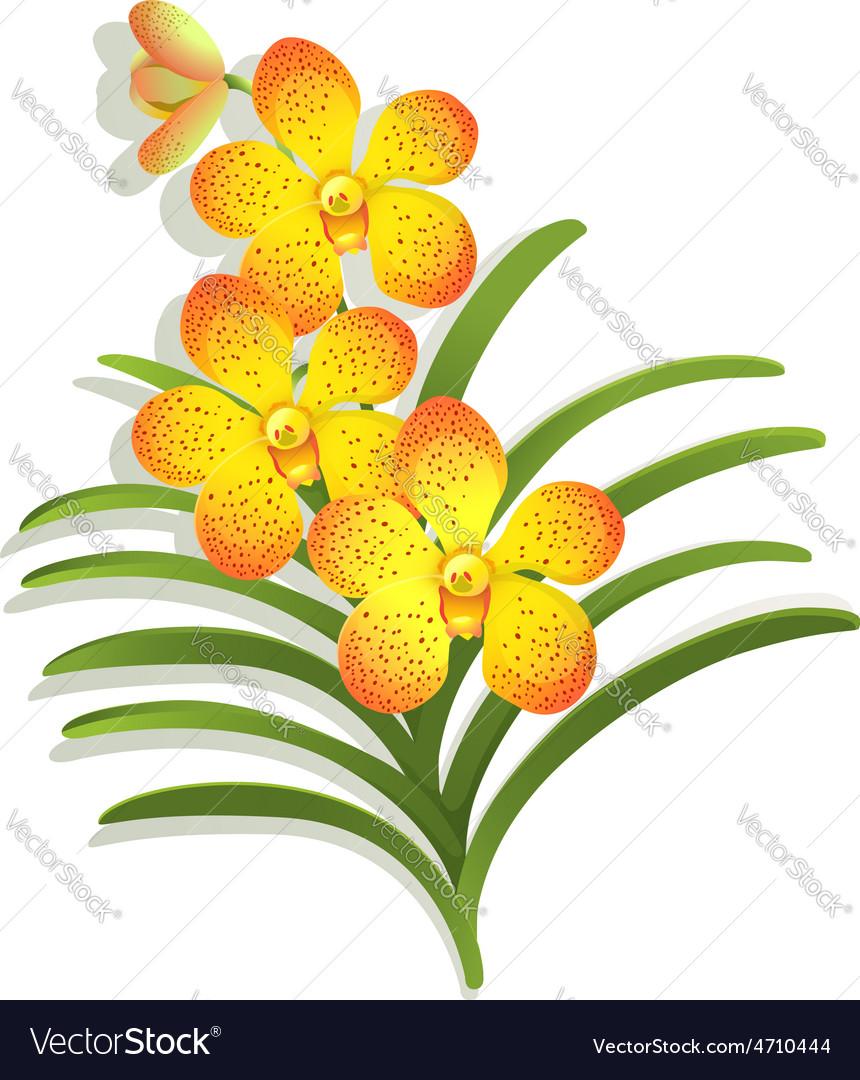 Yellow vanda orchid vector | Price: 1 Credit (USD $1)