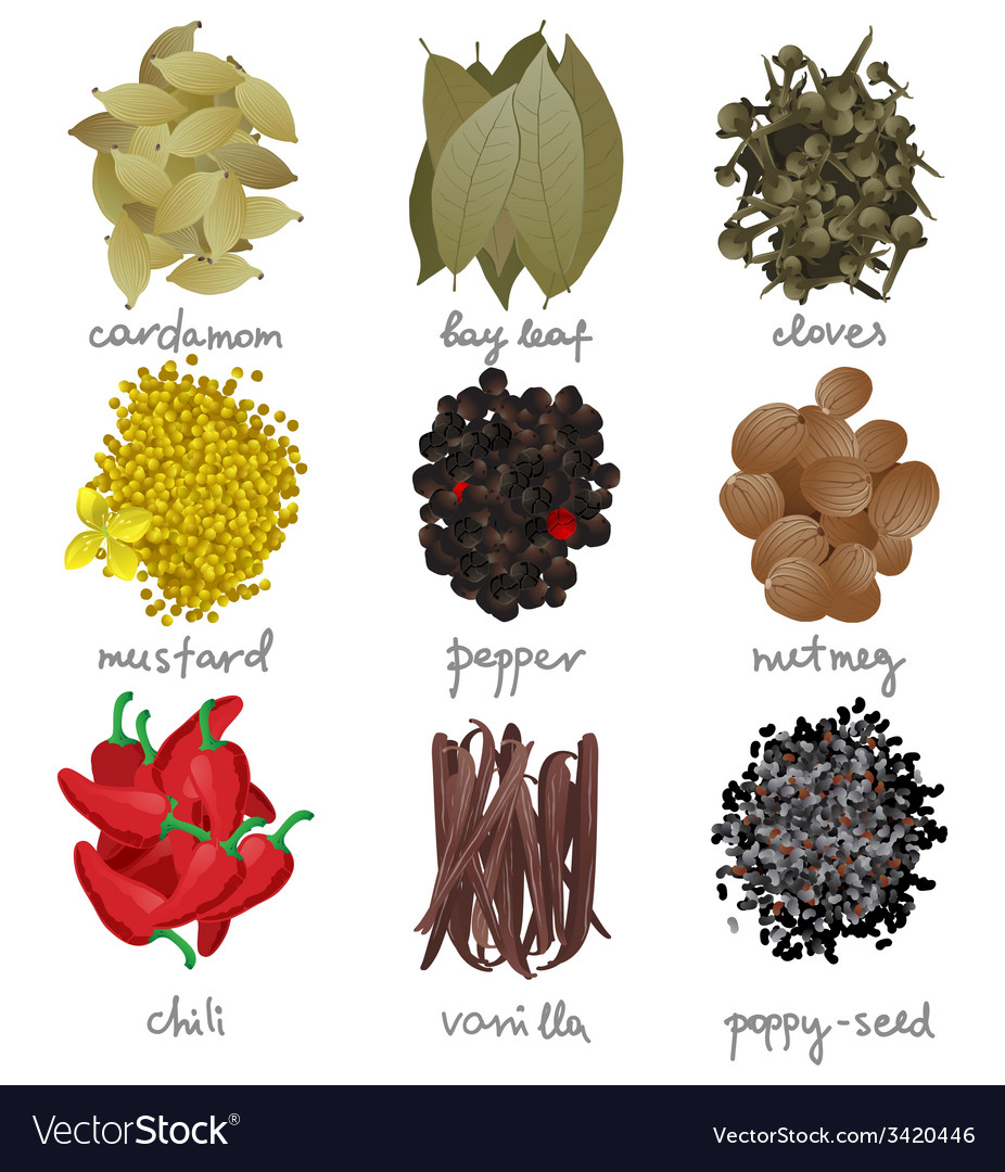 Different spices set vector | Price: 1 Credit (USD $1)