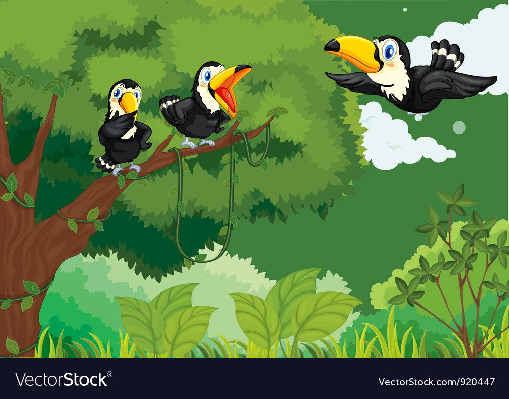 Toucans in the jungle vector | Price: 3 Credit (USD $3)