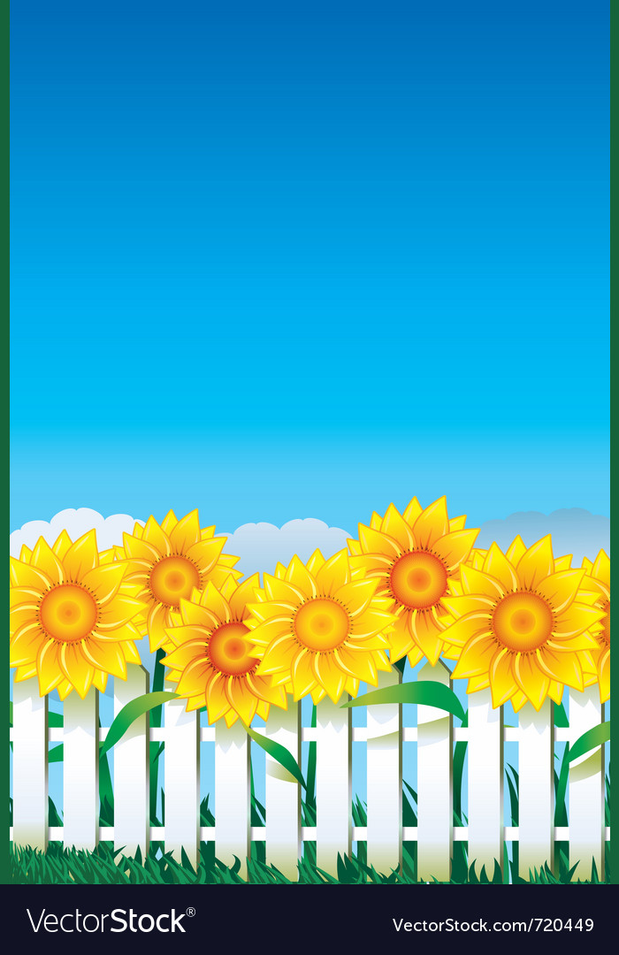 Sunflower behind white fence vector | Price: 1 Credit (USD $1)