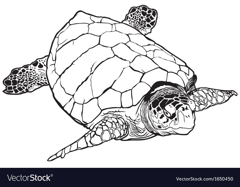 Sea turtle vector | Price: 1 Credit (USD $1)