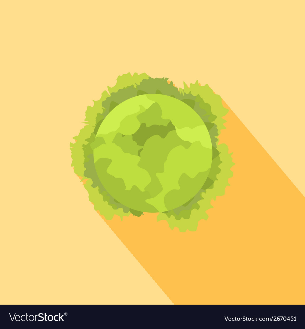 Cabbage icon vector | Price: 1 Credit (USD $1)