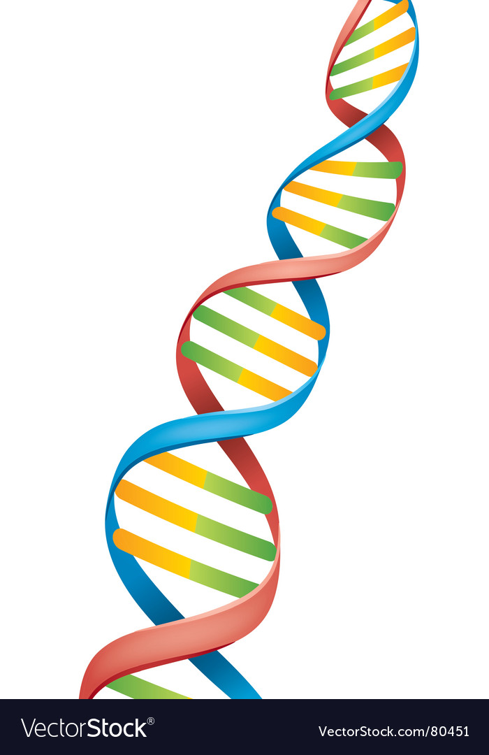 Dna strand vector | Price: 1 Credit (USD $1)
