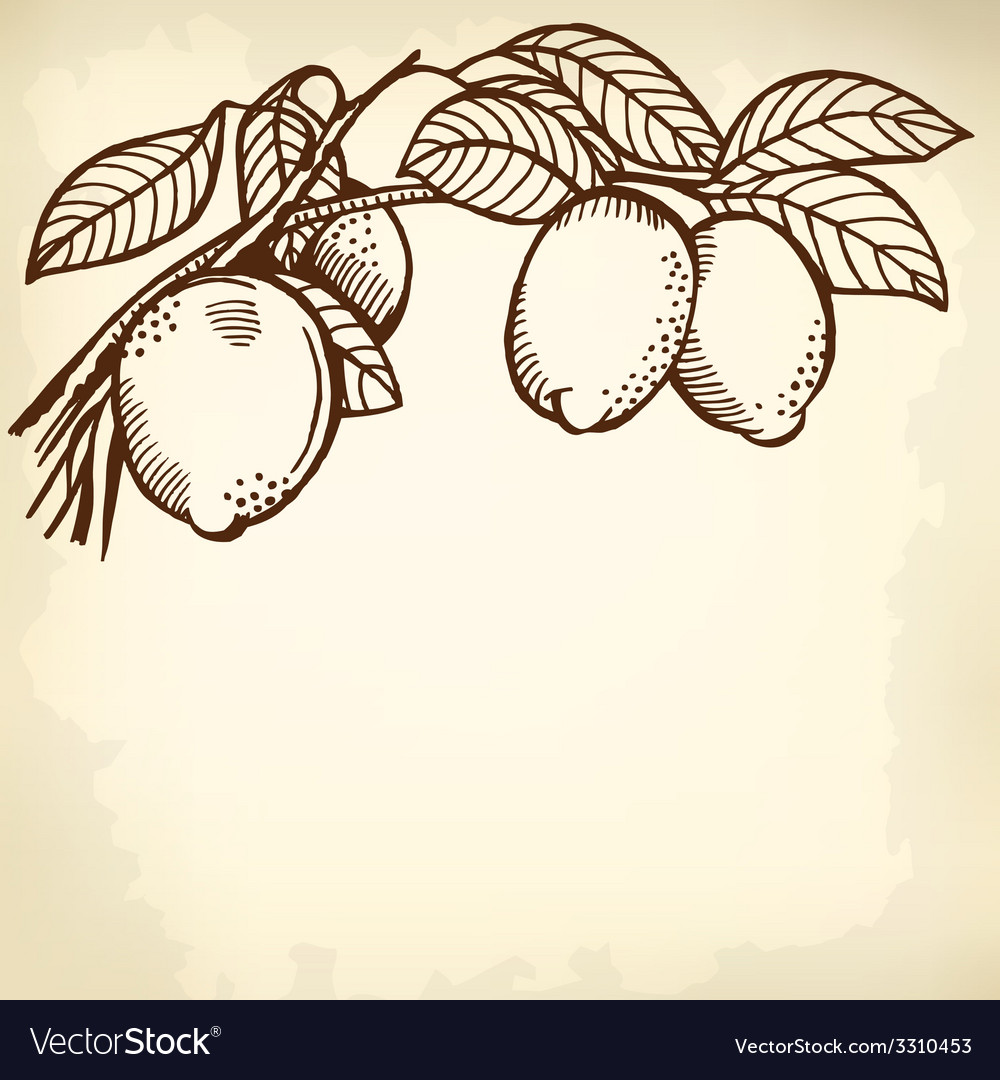 Lemon branch vector | Price: 1 Credit (USD $1)
