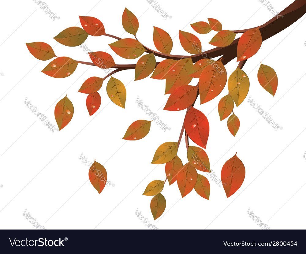 Fall leaves on branch2 vector | Price: 1 Credit (USD $1)