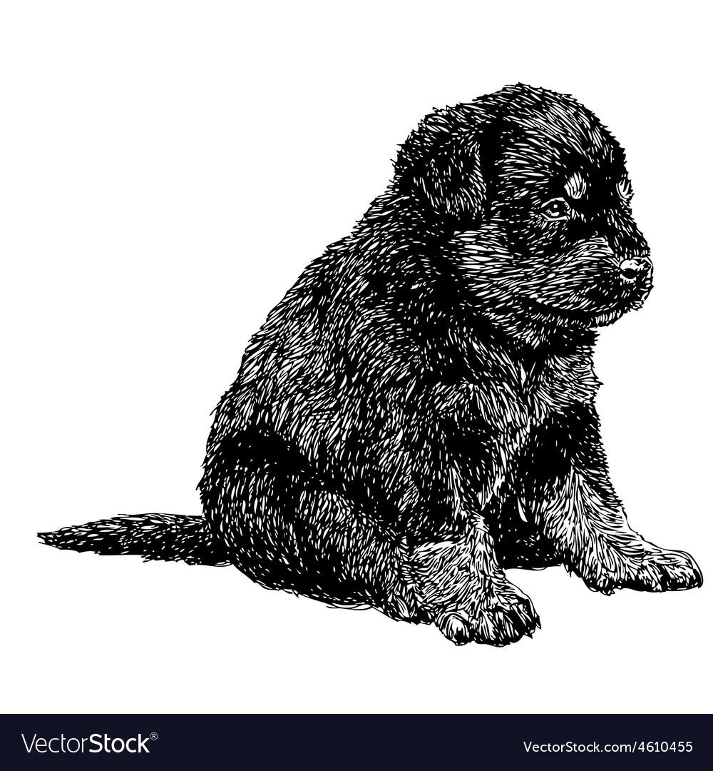 Rottweiler 18 vector | Price: 3 Credit (USD $3)
