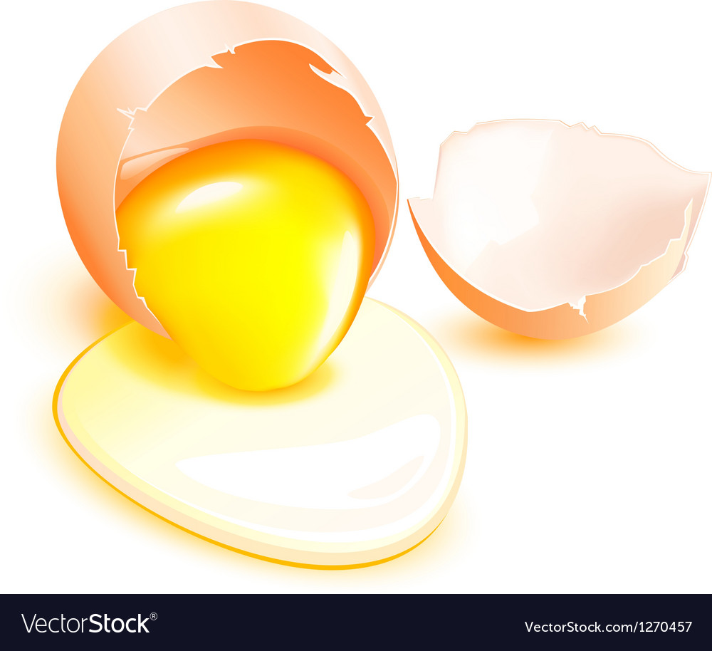 Brown broken egg with flowing yolk on white vector | Price: 1 Credit (USD $1)