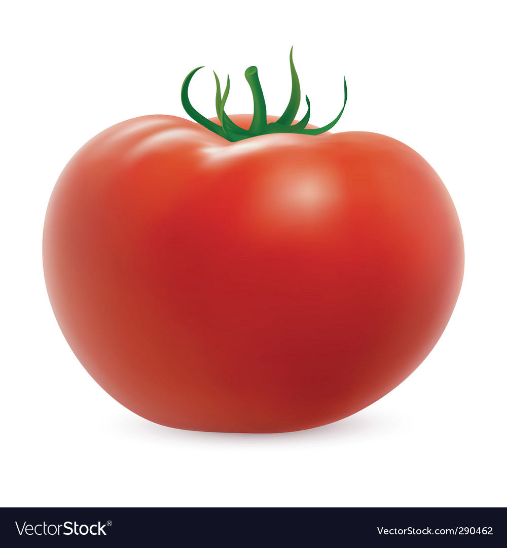 Ripe tomato vector | Price: 1 Credit (USD $1)