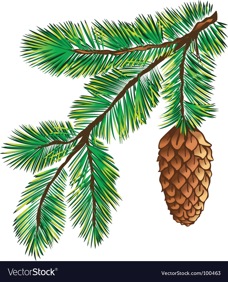 Branch of pine with cone vector | Price: 1 Credit (USD $1)
