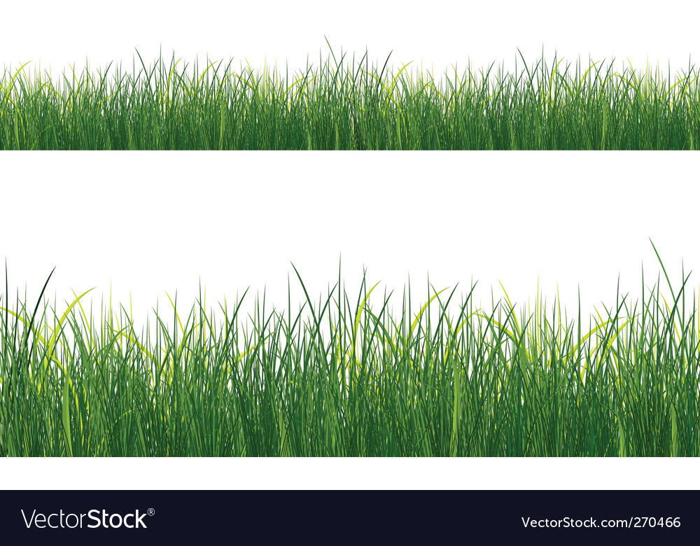 Isolated grass vector | Price: 1 Credit (USD $1)