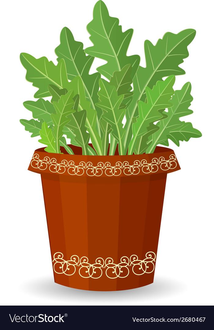 Arugula in a flower pot vector | Price: 1 Credit (USD $1)