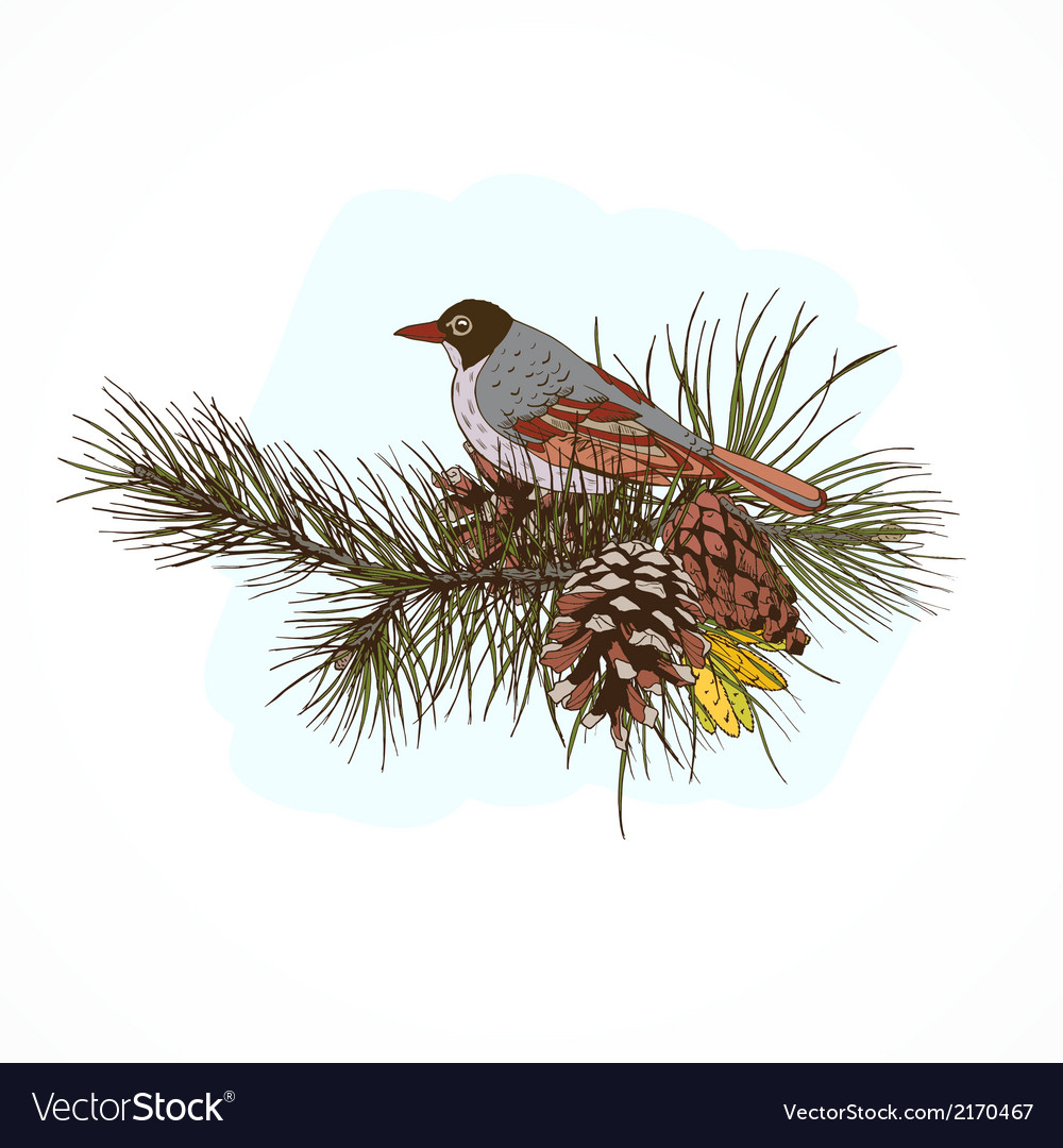 Pine branches with bird vector | Price: 1 Credit (USD $1)