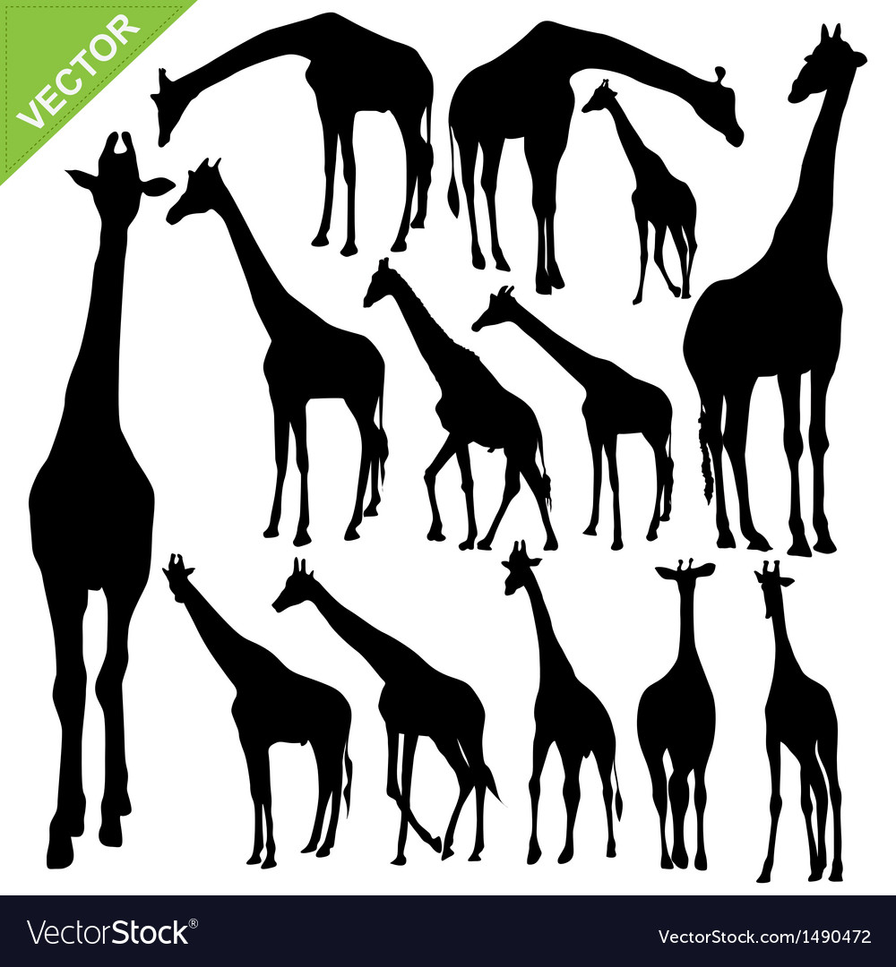 Giraffe silhouettes vector | Price: 1 Credit (USD $1)