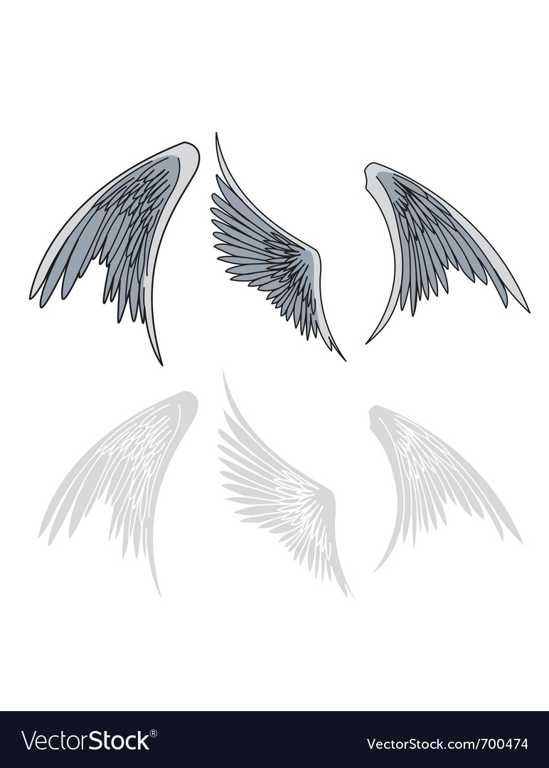 Avian wings vector | Price: 1 Credit (USD $1)