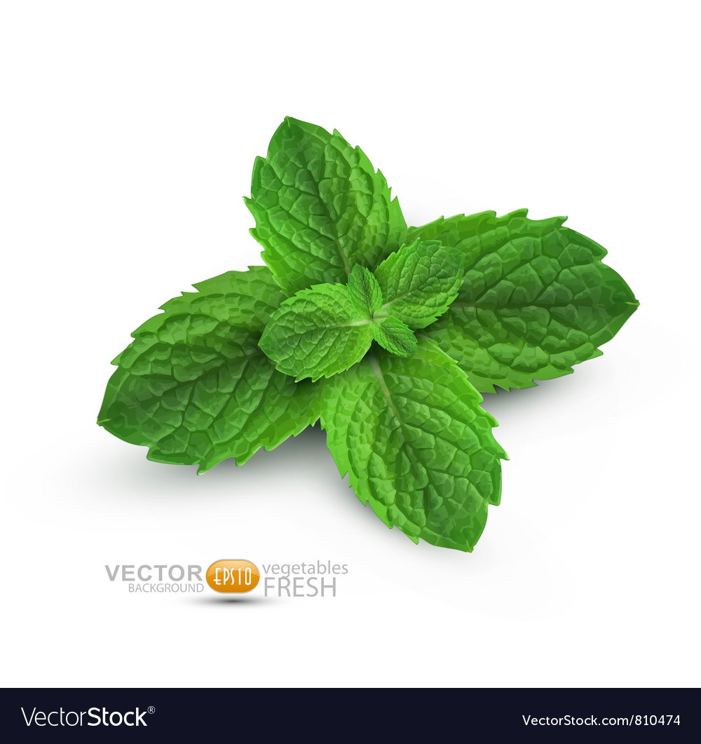 Fresh mint leaves vector | Price: 3 Credit (USD $3)