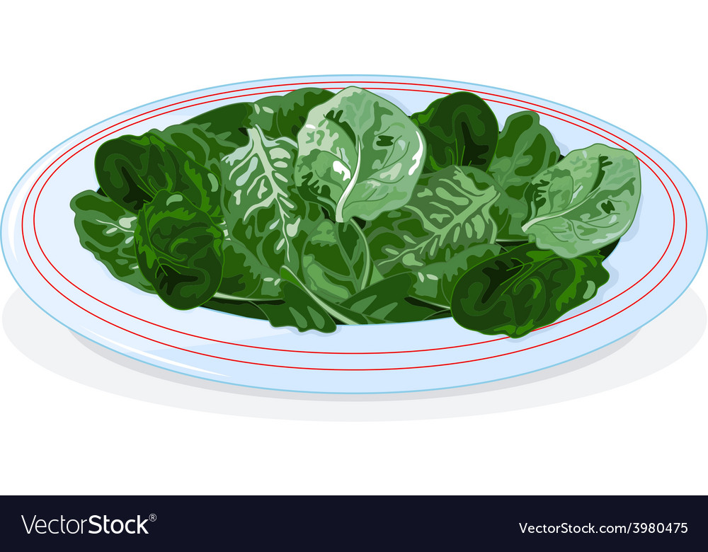 Plate of spinach vector | Price: 1 Credit (USD $1)